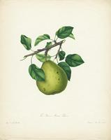 The  Brown Beurre Pear